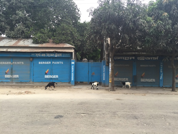Outside Lepra Office, Sirajganj. Image Credit: A. Bow-Bertrand
